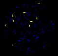 Yalic Symbol